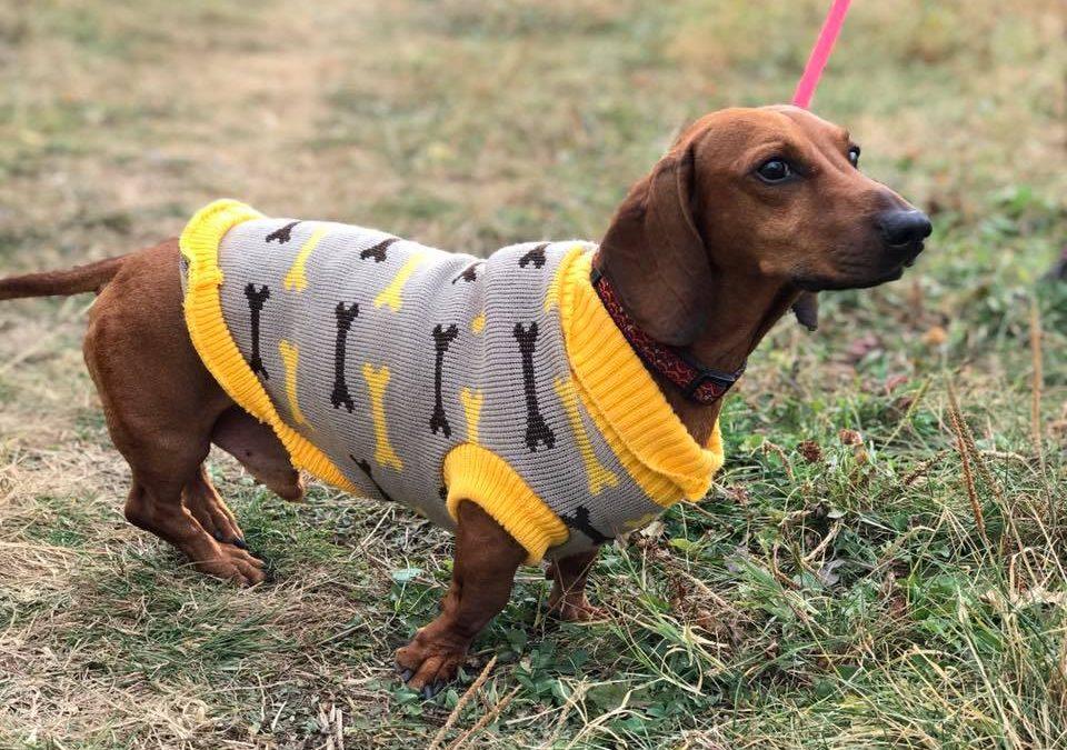 куче с дреха
